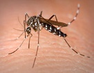 Bệnh sốt dengue và sốt xuất huyết có gì khác biệt?