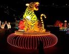 Châu Á rộn ràng chuẩn bị đón năm Hổ