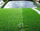 """Mercedes và """"canh bạc"""" mùa World Cup"""