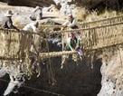 Khám phá cách xây cầu bằng cỏ từ thời Inca