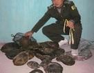 Bắt giữ đối tượng vận chuyển 21,7 kg rùa và hơn 7kg tê tê