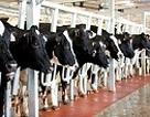 TH true MILK - Điểm sáng mới cho ngành sữa tươi sạch tại Việt Nam