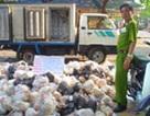 Chuyển vụ 19 tấn gà thối cho công an điều tra