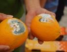 Phát hiện kho chứa hoa quả bán cho siêu thị lên mốc xanh, thối hỏng