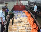 Tranh thủ bão số 3, vận chuyển lậu 20.000 gà giống Trung Quốc vào Việt Nam