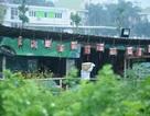Vụ băm nát hồ Tây thu lợi: Chưa hề có giấy phép kinh doanh nhà hàng