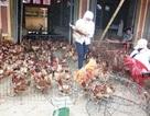"""Hạn 1 tháng để """"xóa"""" gà lậu tại chợ đầu mối Hà Vĩ"""