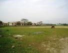 Phê bình Chủ tịch huyện vì để xảy ra sai phạm đất đai