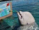 Đến Yokohama xem cá voi tập làm họa sĩ