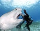 """Rợn tóc gáy cảnh thợ lặn... giỡn với """"sát thủ"""" đại dương"""