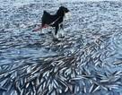 Kinh ngạc xem cá... đóng băng trên biển Na Uy