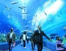 Khám phá khu hải dương học giành 5 kỷ lục thế giới