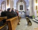 Chó mỏi mòn đợi chủ đã chết ở nhà thờ