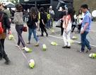 """Giới trẻ Trung Quốc rộ """"mốt"""" dắt bắp cải đi dạo"""