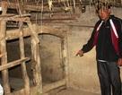 Nghệ An: Người dân hoang mang vì… trâu, bò chết đột ngột