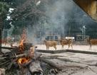 """Xem """"hệ thống"""" sưởi ấm cho thú ở công viên Thủ Lệ"""