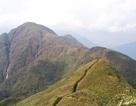 Gần 400ha rừng trúc trên núi Phan Si Păng đang chết khô