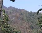 Gió nóng Ô Quý Hồ xuất hiện đe dọa rừng quốc gia Hoàng Liên