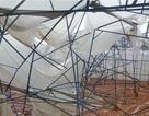 Mưa đá kèm lốc xoáy tại Đà Lạt gây thiệt hại hơn 10 tỷ đồng