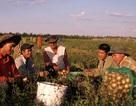 Volga Việt - Nông trại của người Việt trên đất Nga
