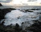 Khủng hoảng hệ sinh thái biển do Cold Snap 116 triệu năm trước