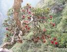 """Khám phá những loài cây """"độc và lạ"""" trên đỉnh Hoàng Liên Sơn"""