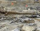 Đuôi khủng long phát hiện ở miền Bắc Mexico