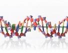 Giải mã bí ẩn ADN của 30 bệnh ung thư phổ biến