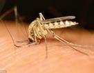 Vắc-xin mới có hiệu quả phòng sốt rét 100%