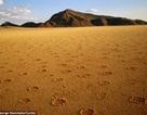 Hàng triệu vòng tròn bí ẩn trên sa mạc ở châu Phi