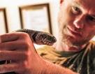 Bí quyết của người miễn dịch với nọc rắn độc