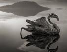 """Sự thật về """"hồ tử thần"""" đã hóa đá hàng loạt sinh vật đến gần"""