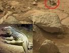 Phát hiện kỳ đà hóa thạch trên sao Hỏa?