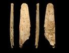 """Người Neandertals phát minh ra """"công cụ xương chuyên biệt đầu tiên"""" ở châu Âu?"""