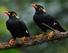 Kinh ngạc chim giao tiếp điêu luyện bằng tiếng Nhật
