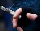 Não thay đổi do hút thuốc lá cần sa