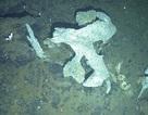 Phát hiện loài giáp xác mới ở Nam Cực