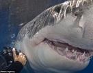 Kinh ngạc người đàn ông chuyên đi chụp… hàm cá mập