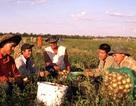Có một cộng đồng người Việt bên bờ sông Volga