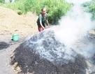 Rừng Quốc gia U Minh Hạ có nguy cơ cháy cao