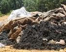 """""""Nếu 100 tấn chất thải này nguy hại, lỗi không phải do chúng tôi"""" (!)"""