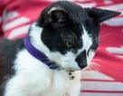 Mèo già nhất thế giới qua đời ở tuổi 30