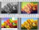 Phần mềm miễn phí giúp dễ dàng tạo hiệu ứng đẹp mắt trên hình ảnh