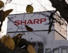 """Sharp chấp nhận """"bán mình"""" cho hãng công nghệ Đài Loan Foxconn"""