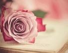 Trang hoàng desktop đón 8/3 với bộ sưu tập hình nền hoa đầy màu sắc