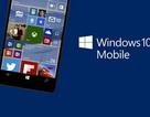 Microsoft tung video hướng dẫn nâng cấp thiết bị lên Windows 10 Mobile