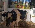 Nhà phát triển game nuôi bò ảo treo thưởng... bò thật