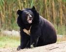 Ngư dân sử dụng võ Karate để đánh đuổi gấu bằng tay không