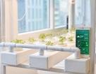 Ứng dụng công nghệ thông tin vào nông nghiệp với giải pháp thông minh Hachi