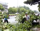 Ninh Bình: Cấm biển, sơ tán hơn 350 người để tránh bão